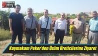 Kaymakam Peker'den Üzüm Üreticilerine Ziyaret