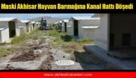 Maski Akhisar Hayvan Barınağına Kanal Hattı Döşedi