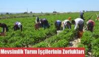 Mevsimlik Tarım İşçilerinin Zorlukları