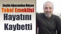 Zeytin Ağacından Düşen Tekel Emeklisi Hayatını Kaybetti